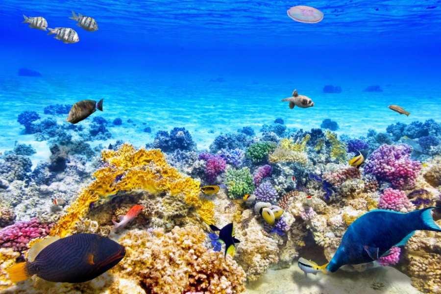 barrière de corail, Australie