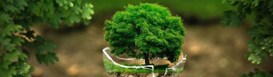 bijou femme arbre de vie