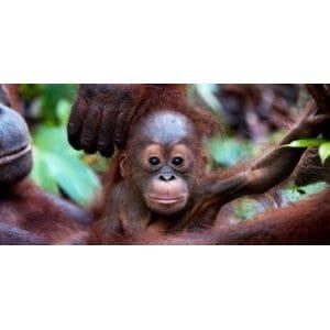 Avaaz achète un forêt pour protéger le milieu naturel