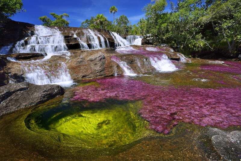 Cano cristales, rivière de Cristal, Colombie