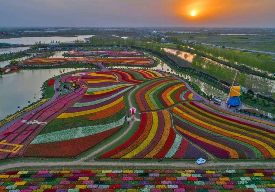 champ de tulipes multicolores