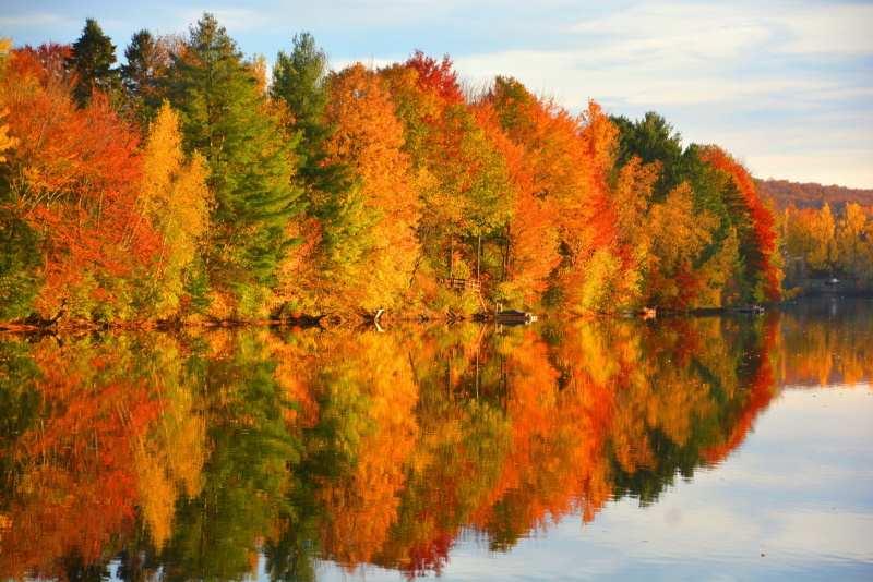 automne dans la forêt canadienne
