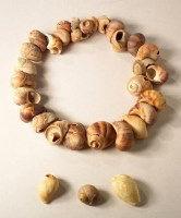 collier de coquillage préhistorique